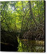 mangrove forest in Costa Rica 1 Canvas Print