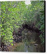 Mangrove Forest Canvas Print by Tony Murtagh