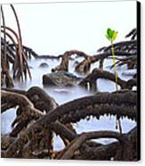 Mangrove Tree Roots Detail Canvas Print by Dirk Ercken