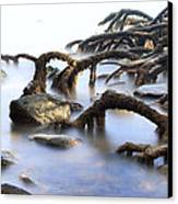 Mangrove Tree Roots Canvas Print