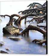 Mangrove Tree Roots Canvas Print by Dirk Ercken