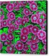 Many Blooms Canvas Print by Michael Sokalski