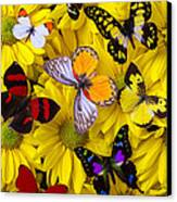 Many Butterflies On Mums Canvas Print