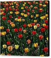 Many Tulips Canvas Print by Raymond Salani III