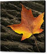 Maple Leaf Canvas Print by Scott Norris