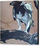 Martial Eagle Canvas Print by Robert Teeling