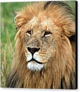 Masai Mara Lion Portrait    Canvas Print by Aidan Moran