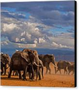 Matriarch On Amboseli Canvas Print by Pieter Ras