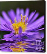Mauve Softness And Reflections Canvas Print by Kaye Menner