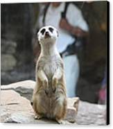 Meerket - National Zoo - 01132 Canvas Print by DC Photographer