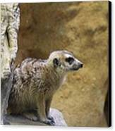 Meerket - National Zoo - 01135 Canvas Print by DC Photographer