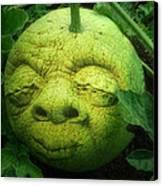Melon Head Canvas Print by Jack Zulli