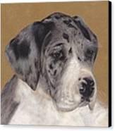 Merle Great Dane Puppy Canvas Print