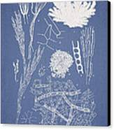 Microdyctyon And Cladophora Canvas Print