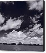 Midwest Corn Field Bw Canvas Print by Steve Gadomski