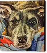 Milo The Lurcher Canvas Print by Pet Portraits by Julie Bunt