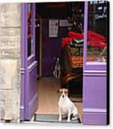 Minding The Shop. Two French Dogs In Boutique Canvas Print by Menega Sabidussi