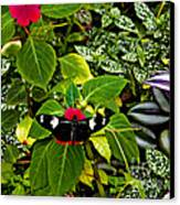 Mindo Butterfly At Rest Canvas Print by Al Bourassa