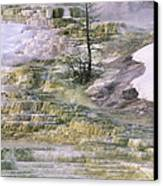 Minerva Springs Terraces Yellowstone National Park Canvas Print