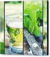 Mint Tea Collage Canvas Print by Mythja  Photography