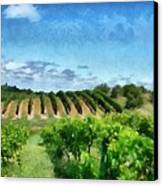 Mission Peninsula Vineyard Ll Canvas Print by Michelle Calkins