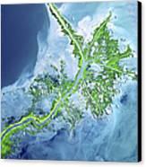 Mississippi River Delta Canvas Print