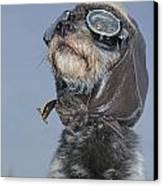Mixed Breed Dog Dressed In Leather Cap Canvas Print by Darwin Wiggett