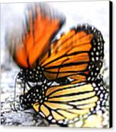 Monarchs In Love Canvas Print