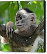 Monkey Business Canvas Print by Bob Christopher