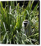 Monkey In The Grass Canvas Print by Graham Palmer