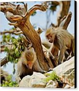 Monkeys On Mountain Canvas Print by George Paris