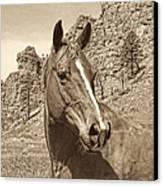 Montana Horse Portrait In Sepia Canvas Print