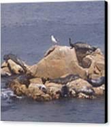 Monterey Sun Bath Canvas Print