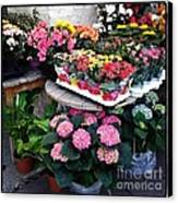 Montpellier Flower Shop Canvas Print by Victoria Herrera