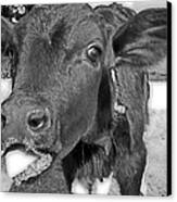 More Milk Please Canvas Print by Victoria Sheldon