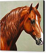 Morgan Horse - Flame Canvas Print by Crista Forest