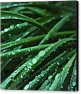 Morning After The Rain Canvas Print by Cindy Rubin