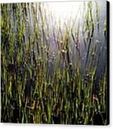 Morning Light Of God Canvas Print
