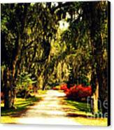 Moss On The Trees At Monks Corner In Charleston Canvas Print