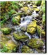 Mossy Creek Canvas Print by Bob Jackson