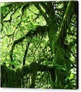 Mossy Tree Canvas Print by Athena Mckinzie