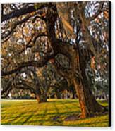 Mossy Trees At Sunset Canvas Print