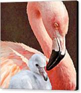 Mother And Baby Flamingo Canvas Print