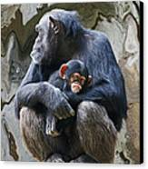 Mother And Child Chimpanzee 2 Canvas Print