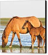 Mother And Foal Canvas Print by Bob Decker
