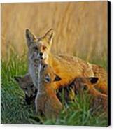 Mother Fox And Kits Canvas Print by William Jobes