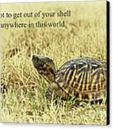 Motivating A Turtle Canvas Print by Robert Frederick
