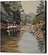 Mountain Home Creek Canvas Print