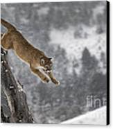 Mountain Lion - Silent Escape Canvas Print by Wildlife Fine Art