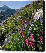 Mountain Meadow Canvas Print by Cole Black